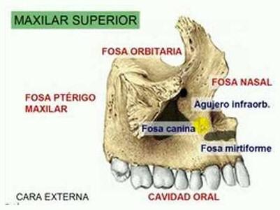 FUNDAMENTOS DE ANATOMIA Y FISIOLOGIA BUCO-DENTAL.